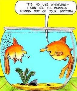 fish farting