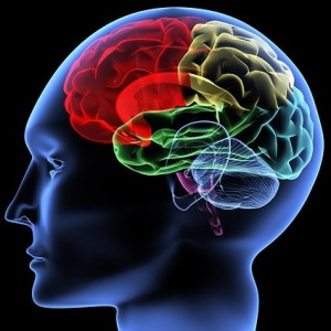 human_brain_picture_165499